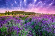 priroda-voshod-peyzazh-cvety
