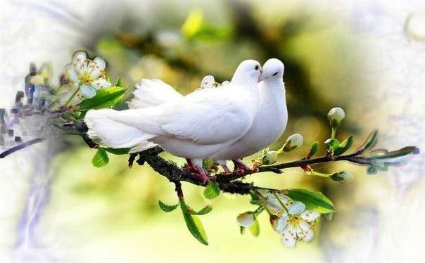 «Отданная любовь –  это любовь обретенная»  Джон М. Темплтон