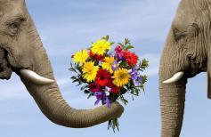 Искусство-дарить-цветы