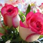 «Внешняя красота преходяща, а внутренняя вечна»  Сейид Хуссейн Наср