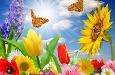 бабочки-и-подсолнухи1