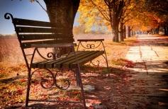 osenniy-park-skameyka-listopad