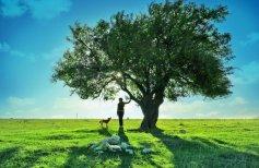 sobaka-derevo-devushka-podrostok-priroda-pejzazh-nebo-oblaka-devochka-zamechatelno-zemlya-mechtatelnyj-prekrasnyj-mechtatelnogo-pole-zelenyj-trava-shhenok-travy-shheno